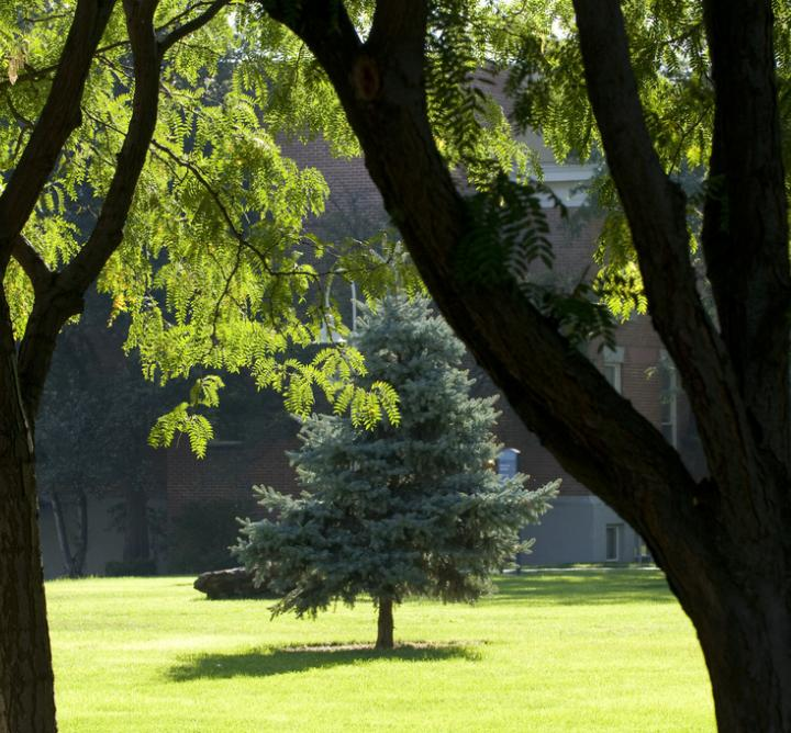Trees on campus lawn